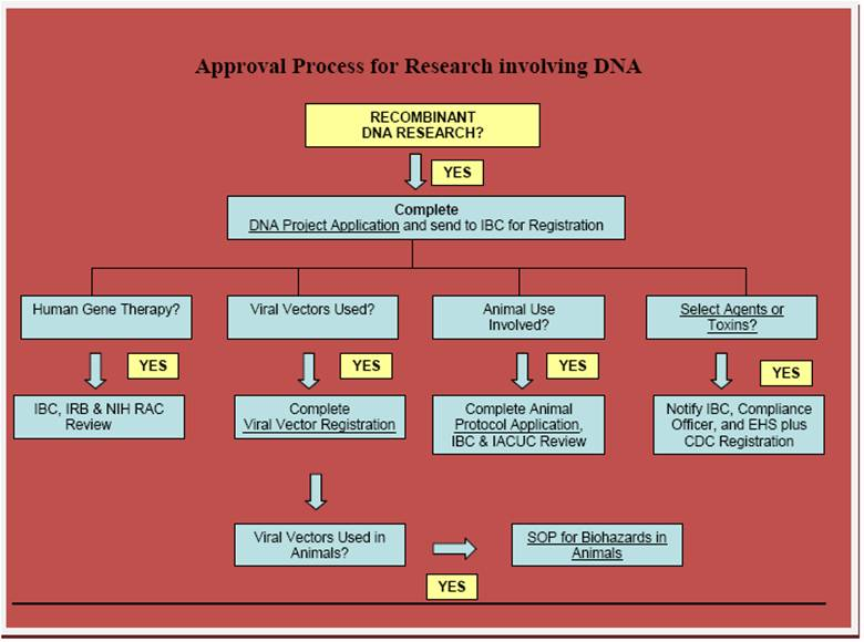 Approval Process for Research involving DNA
